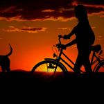 Ausflug_mit_hund_fahrradverleih