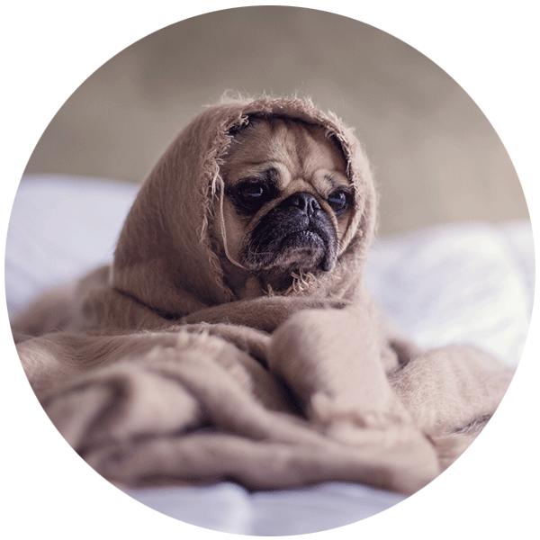 Hunde_sind_willkommen