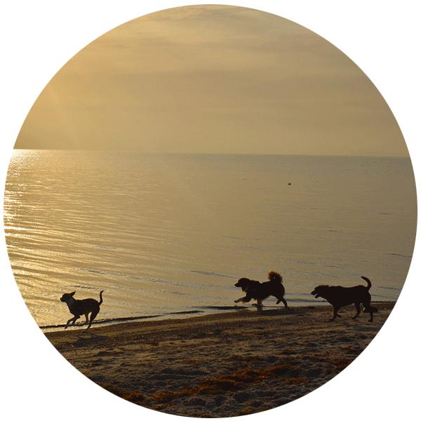 Hundestrand_Sierksdorf